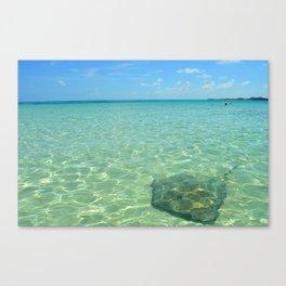 Ocean Stingray Canvas Print