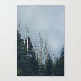 Morning Hike Through The Smokies Canvas Print