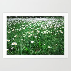 Daisy View Art Print