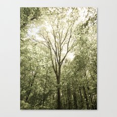 Branches of Life Canvas Print