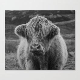 Highland cow III Canvas Print