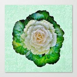 Beige Cabbage from the Garden Canvas Print