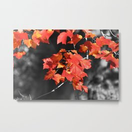 Cold Fall Metal Print