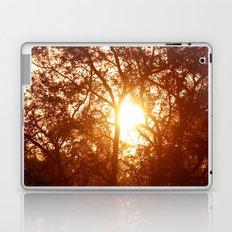 Canopy Sunrise Laptop & iPad Skin
