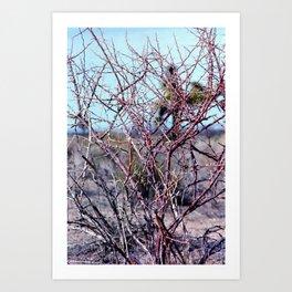 Red Thorn Bush, Joshua Tree, 35mm Film Art Print