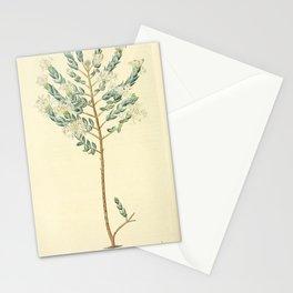 Flower 1268 pimelea humilis Lowly Pimelea14 Stationery Cards