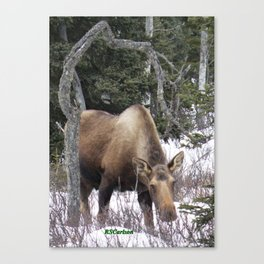 Roadside Browse Canvas Print