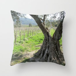 Olive tree in vineyard Throw Pillow