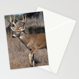 White Tail Deer  Stationery Cards