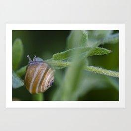 Snail on green #2 Art Print