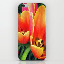 Coral Tulips in Bloom iPhone Skin
