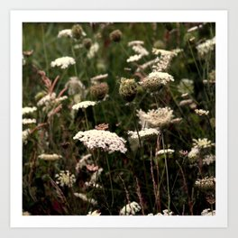 White Fields Art Print