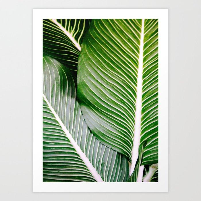 Big Leaves - Tropical Nature Photography Kunstdrucke