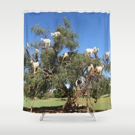 Goats in a tree Shower Curtain