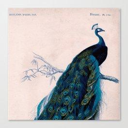 Vintage peacock bird print colorful feathers 1800s antique art nouveau deco nature book plate Canvas Print