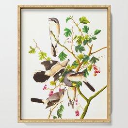 Great cinereous Shrike, or Butcher Bird John James Audubon Birds Vintage Scientific Illustration Serving Tray