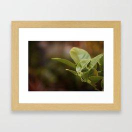 Wistful Framed Art Print