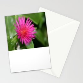 Pink Flower of Succulent Carpet Weed  Stationery Cards