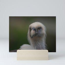 Face Of A Griffon Vulture Mini Art Print