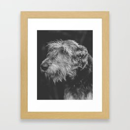 The Irish Wolfhound Framed Art Print
