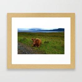 Majestic Coo Framed Art Print