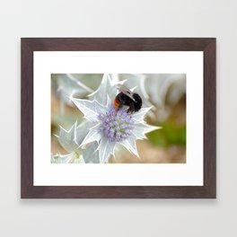 Normandy Bee Framed Art Print
