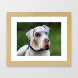 Leo the Great Dane Framed Art Print