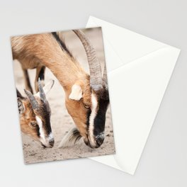 domesticated goats eating from sand Stationery Cards