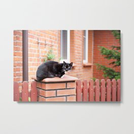 lonely stray black cat sitting Metal Print