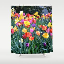 TULIPS IN MY GARDEN - SPRING IS HERE Shower Curtain