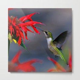 Hummingbird on a red flower Metal Print