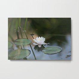 Water Lily 2 Metal Print
