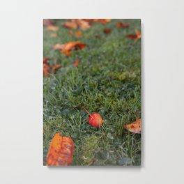 Autumn crab apple Metal Print