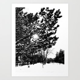 Low Winter Sun Art Print