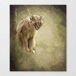 Caracal- wild cat Canvas Print