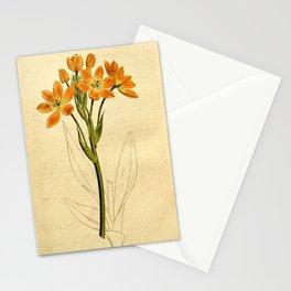 190-ornithogalum aureum, Golden Ornithogalum Stationery Cards