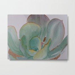 Saving Water (succulents) Metal Print