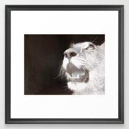Lion Cub 2 Framed Art Print