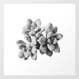 Succulent Blooms - Grayscale Art Print