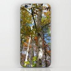 Birch Trees in Autumn iPhone & iPod Skin