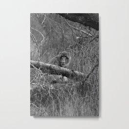 Barbary Macaque bw Metal Print