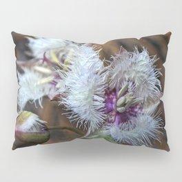 Hairy Star Tulip (Calochortus Tolmiei) Pillow Sham