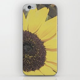 Giant Sunflower Colored Sketch iPhone Skin
