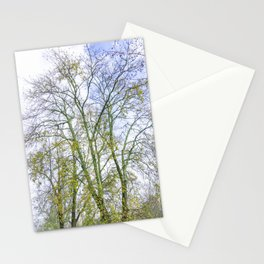 Park with big old trees Stationery Cards