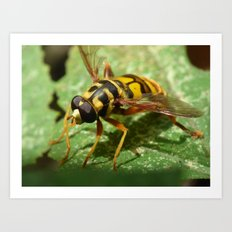virginia flower fly 2016 Art Print