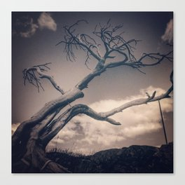 Burmis Tree Canvas Print