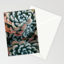 Autumn Succulent #1 Stationery Cards