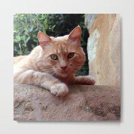 Red Cat Metal Print