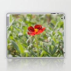 Red Flower Laptop & iPad Skin