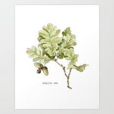 English Oak Art Print